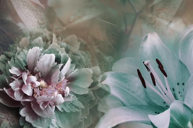 Floral background of turquoise lily and green-violet peony. Flowers close-up on a pink-turquoise background. Flower composition royalty free stock photography