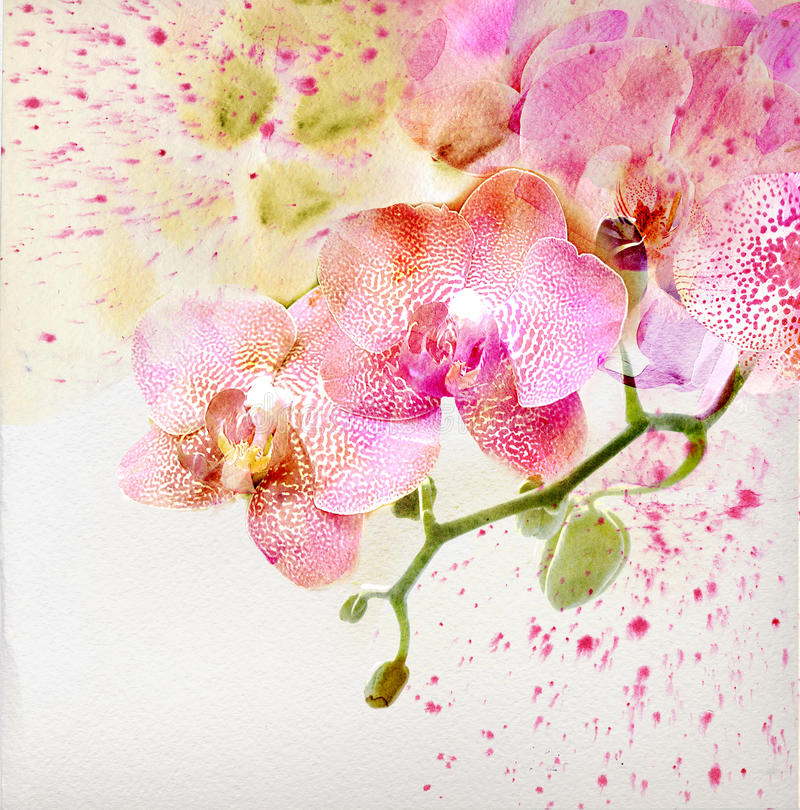 Floral background with watercolor orchid royalty free stock photos