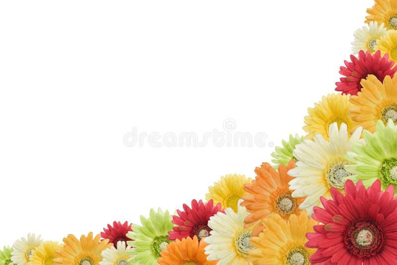 Floral background on white stock illustration