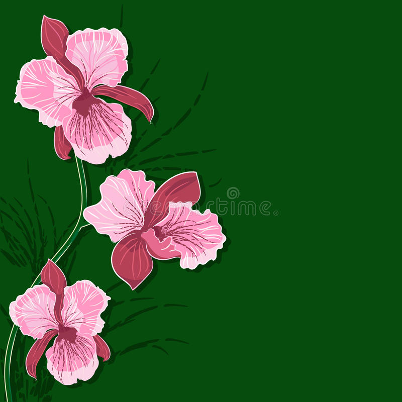 Free Floral Background With Orchid Royalty Free Stock Photography - 30729747
