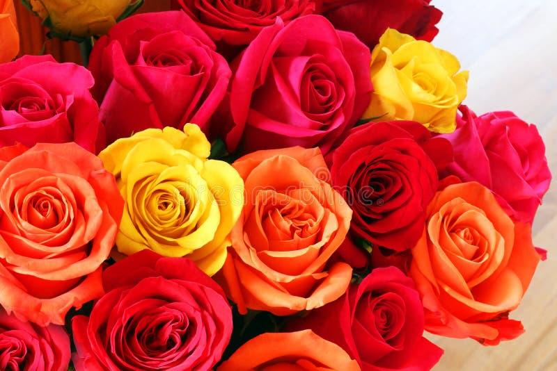 Floral bakgrund med färgstarka rosor arkivfoto