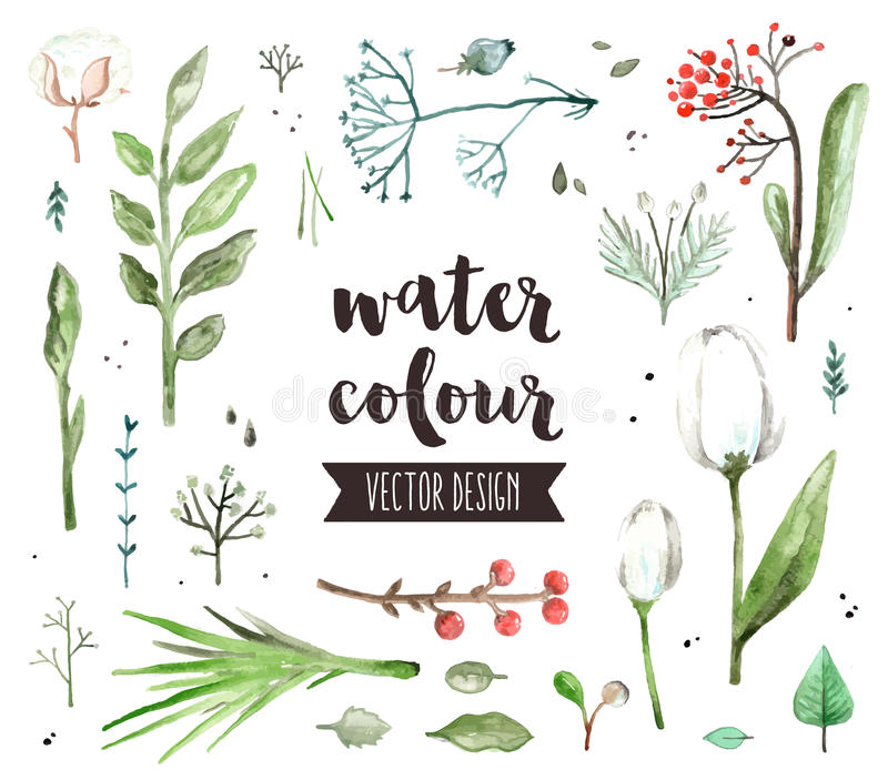 Floral Blossom Watercolor Vector Objects royalty free illustration