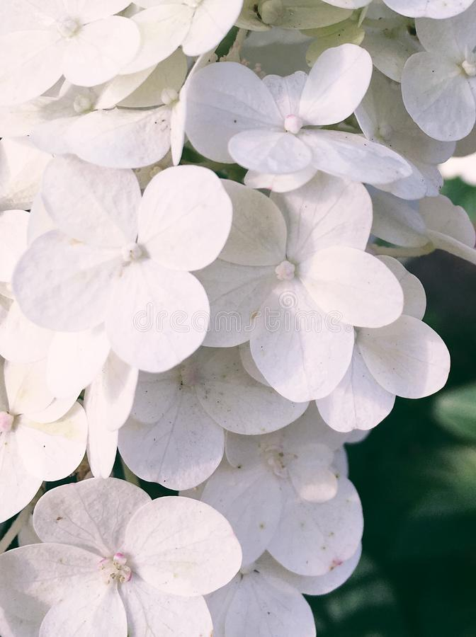 Floral blossom - wedding, holiday and flower garden styled concept. Elegant visuals stock photos