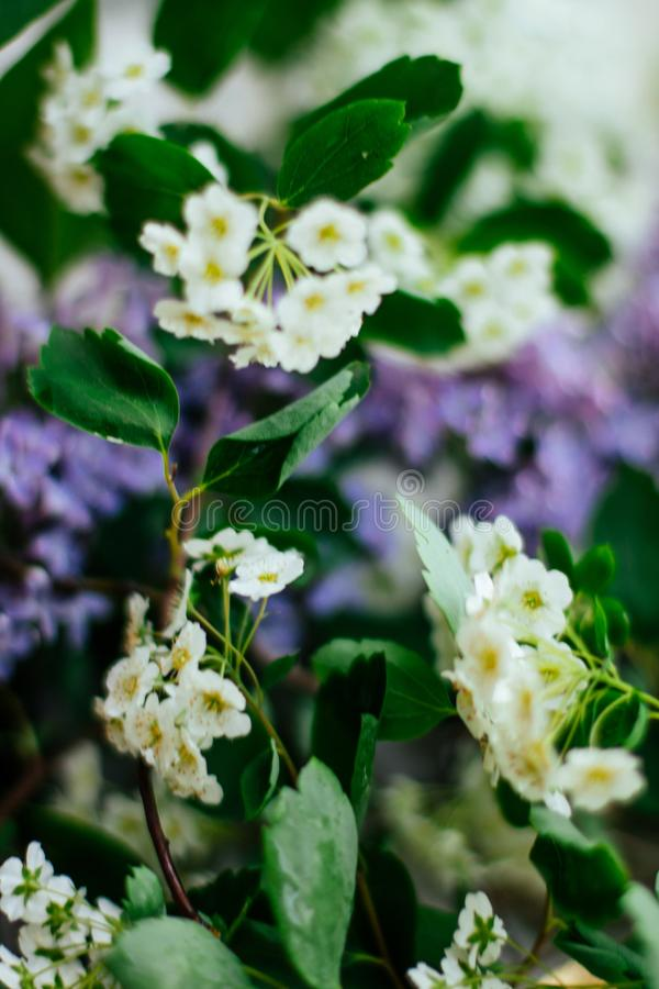Floral blossom - wedding, holiday and flower garden styled concept. Elegant visuals royalty free stock image