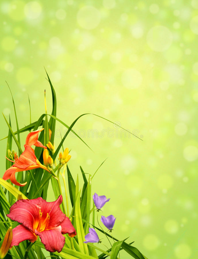 Download Floral border corner stock photo. Image of lily, liliaceae - 19493706