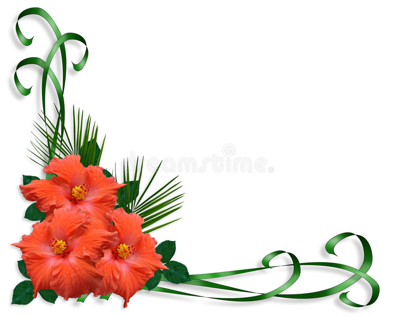 Floral border Hibiscus tropical vector illustration