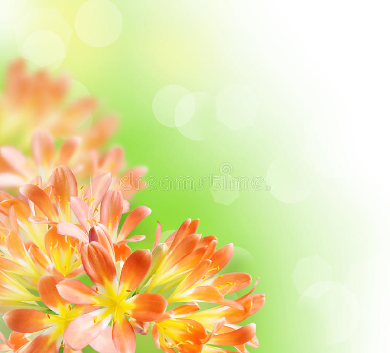Floral Border (Kafir-lily) stock photography