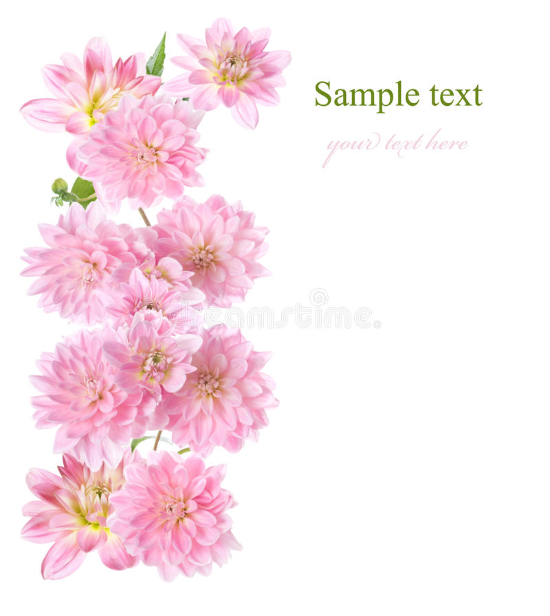 Download Floral Border With Pink Dahlia Stock Photo - Image of concept, postcard: 18039768