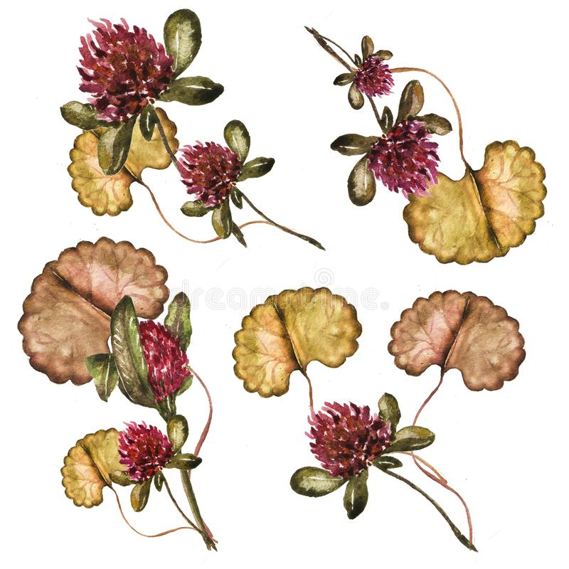 Floral bouquet with clover and leaves watercolor illustration. stock illustration