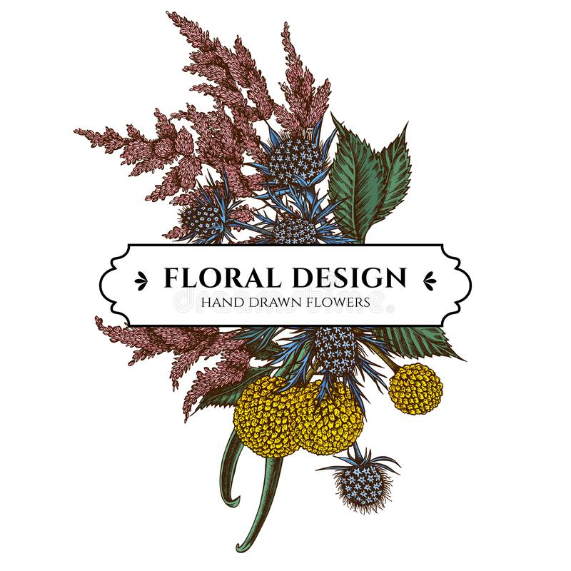 Floral bouquet design with colored astilbe, craspedia, blue eryngo. Stock illustration royalty free illustration
