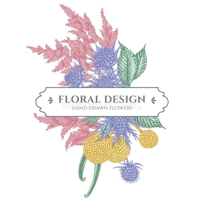 Floral bouquet design with pastel astilbe, craspedia, blue eryngo. Stock illustration royalty free illustration