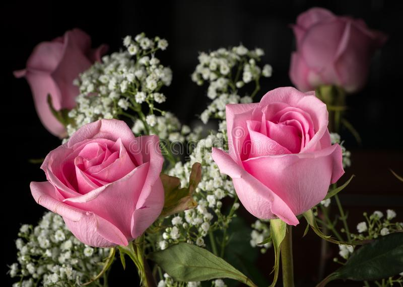 A floral bouquet with pink roses and baby`s breath royalty free stock images