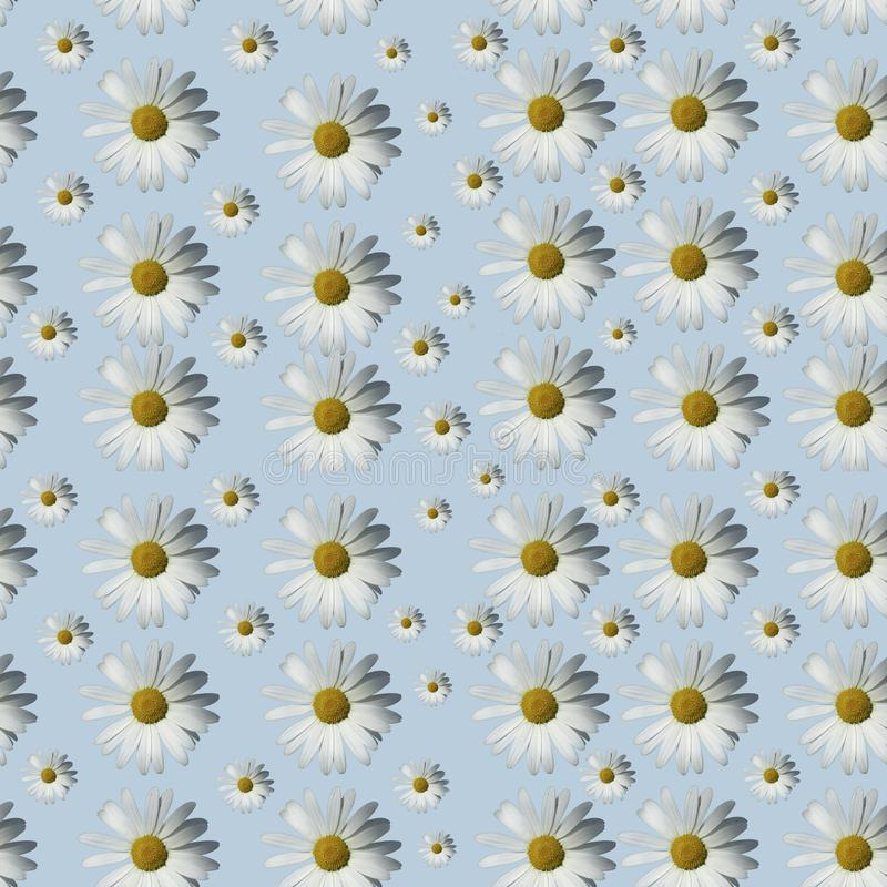 Floral camomile pattern on a blue background. Flat layer royalty free stock photography
