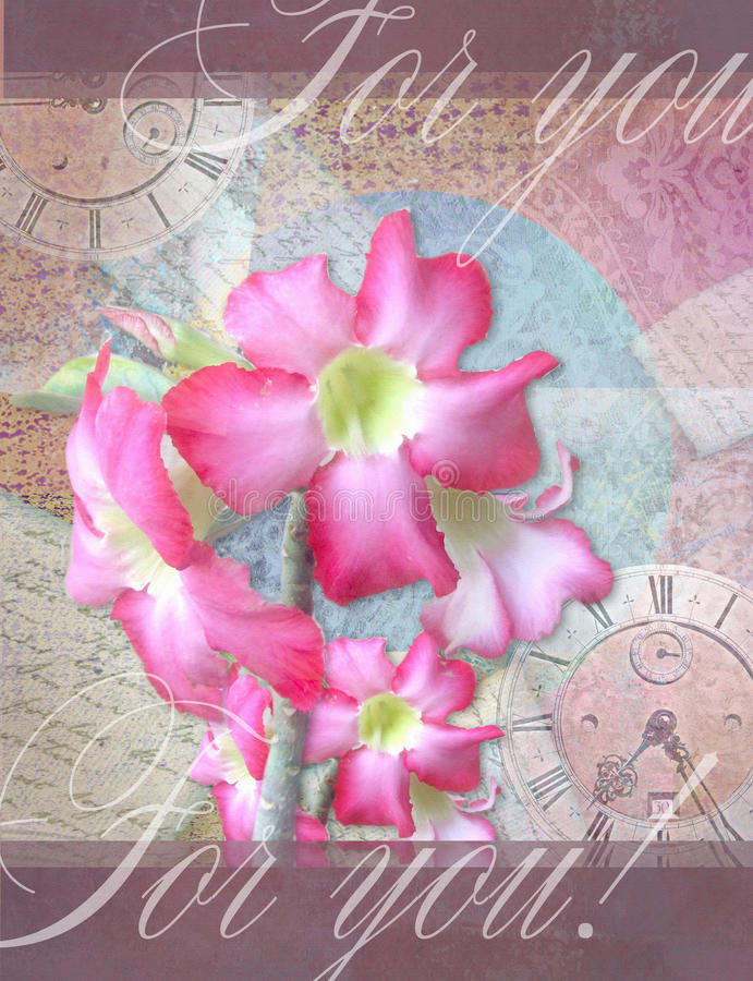 Floral card with beautiful adenium pink flowers. vector illustration