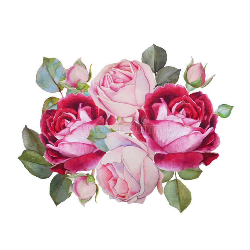 Floral card. Bouquet of watercolor roses. Illustration royalty free illustration