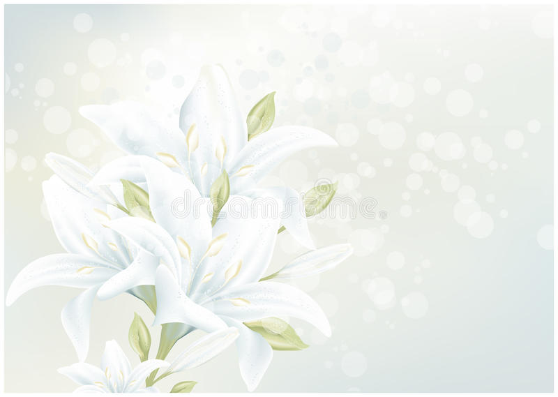 Floral card with lily stock images