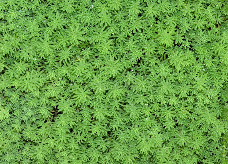 Download Floral carpet stock photo. Image of fern, herbs, background - 194516