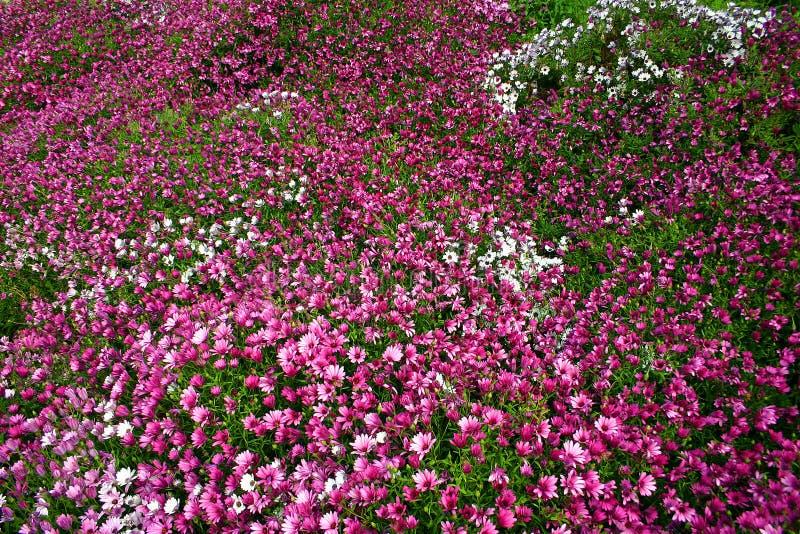 Floral carpet stock images