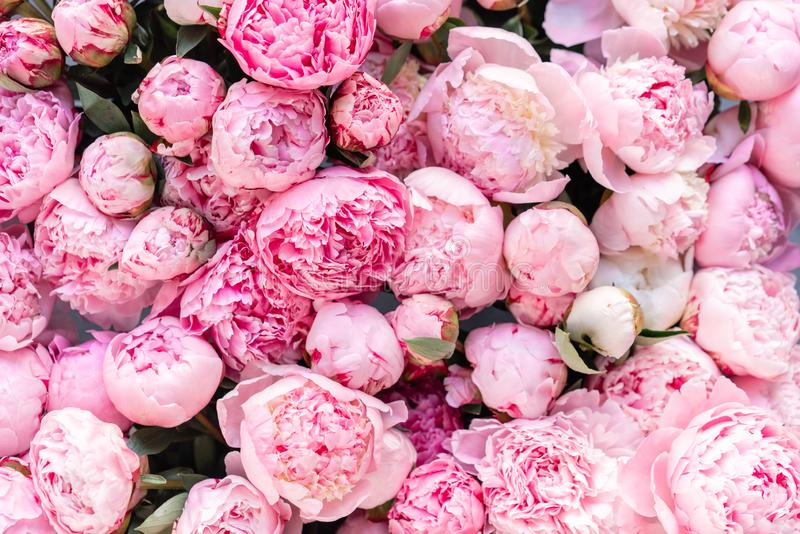 Floral Pink Wallpaper Stock Images Download 85 174 Royalty