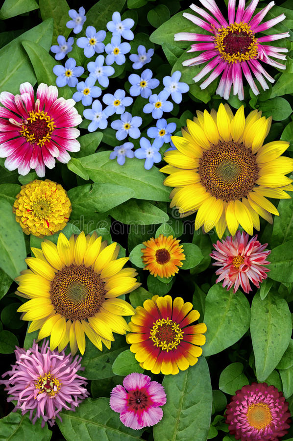 Download Floral Collage Stock Image - Image: 26635311