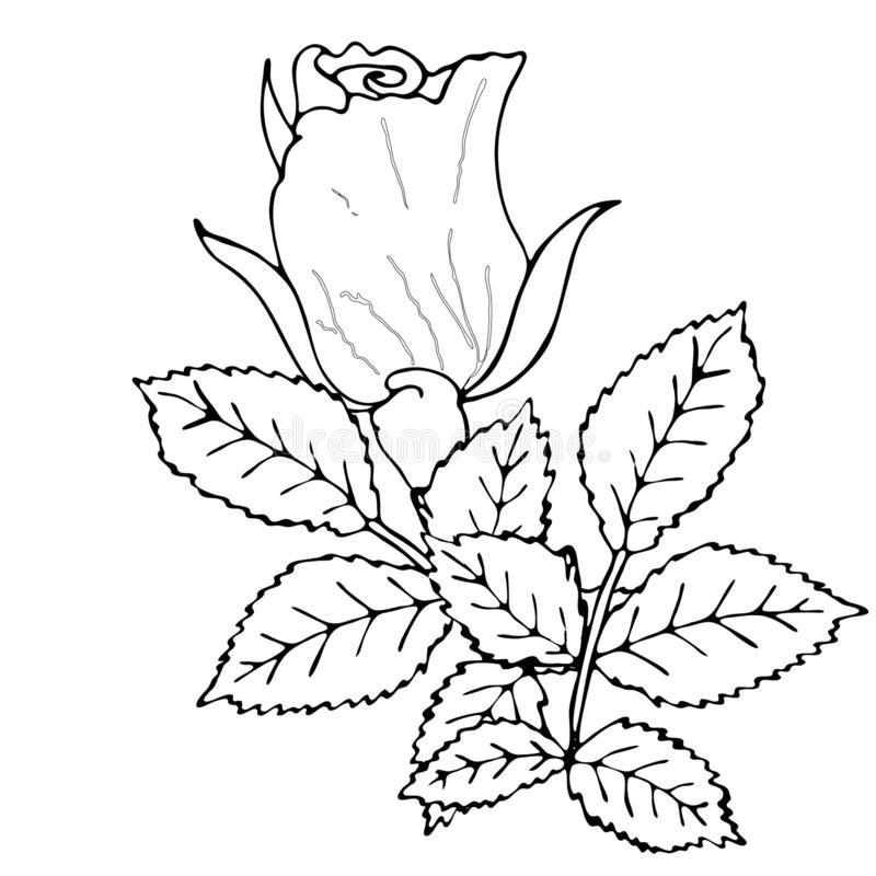 - Floral Coloring Template With Black Line Flower Stock Vector - Illustration  Of Beauty, Coloring: 151350923