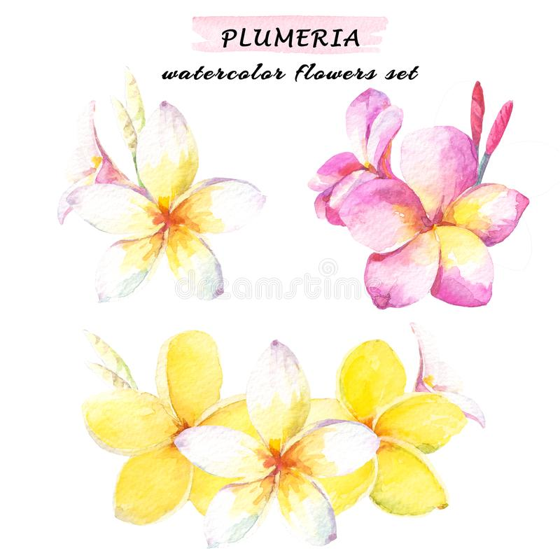 Floral composition set of plumeria flowers. Watercolor illustration with white, yellow and pink plumeria. Isolated on white backgr royalty free illustration