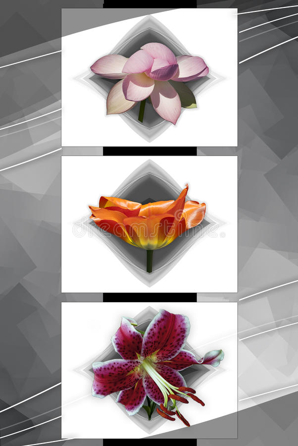 Floral Cubism 2 royalty free stock photo