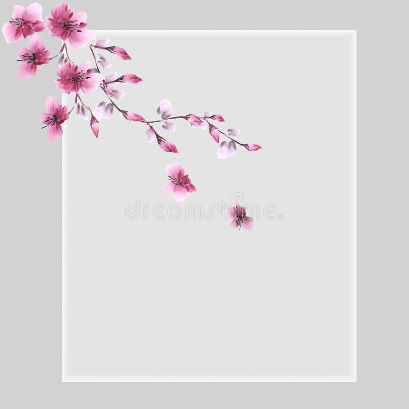 Floral decoration. Birthday card. Blossoming branch with pink flowers on a gray background. Watercolor royalty free stock photo