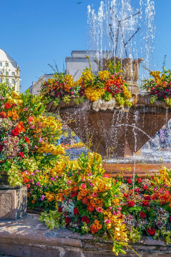 Floral decorations in Victory Square, Timisoara, Romania. TIMISOARA, ROMANIA - APRIL 20, 2019: Floral decorations in Victory Square on the occasion of the Flower stock photos