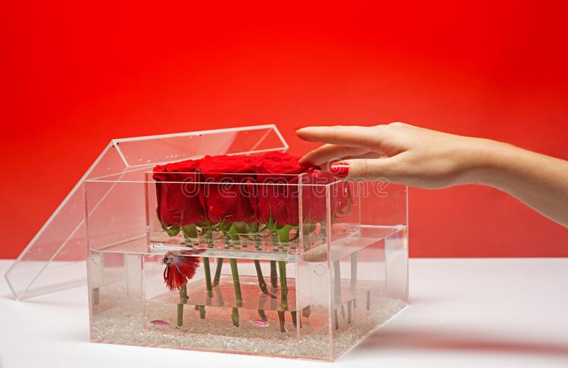 Floral design. Aquarium with fish and roses. Flower shop. Love and passion. Valentines day present. red rose bouquet in. Box. happy birthday. soft hand skin stock images