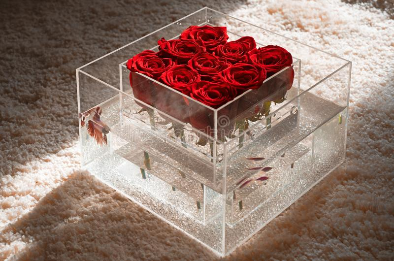 Floral design. Aquarium with fish and roses. Flower shop. Valentines day present. Love and passion. red rose bouquet in. Box. Surprise for her. home design. spa royalty free stock photos
