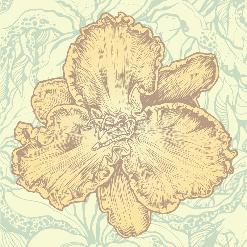 Floral design element and abstract floral backgrou vector illustration