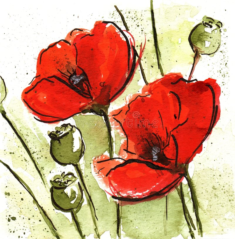 Floral Design with poppies. Handpainted floral watercolor illustration Background: Pair of Red poppie flower and green buds on white.Art is created and painted vector illustration