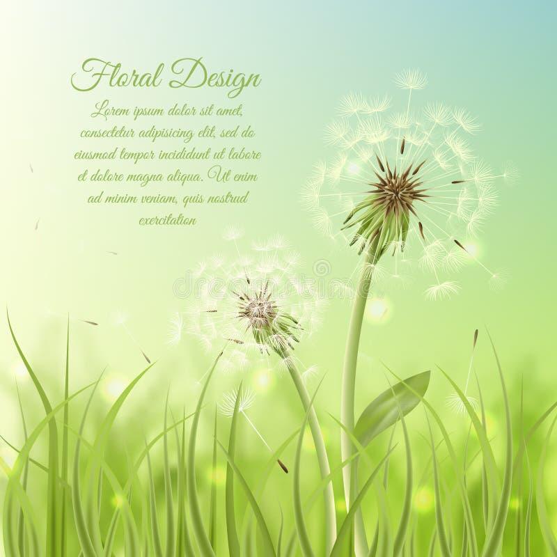Floral design poster of dandelion vector illustration