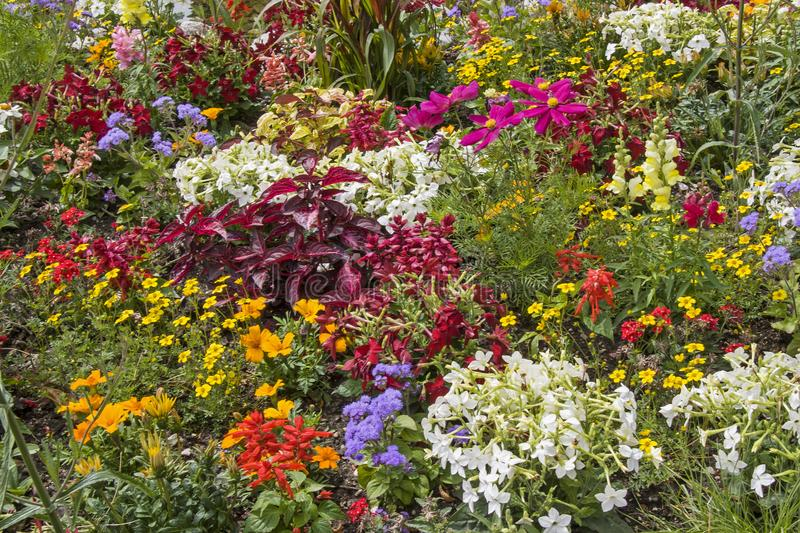 Floral diversity in the park royalty free stock photography