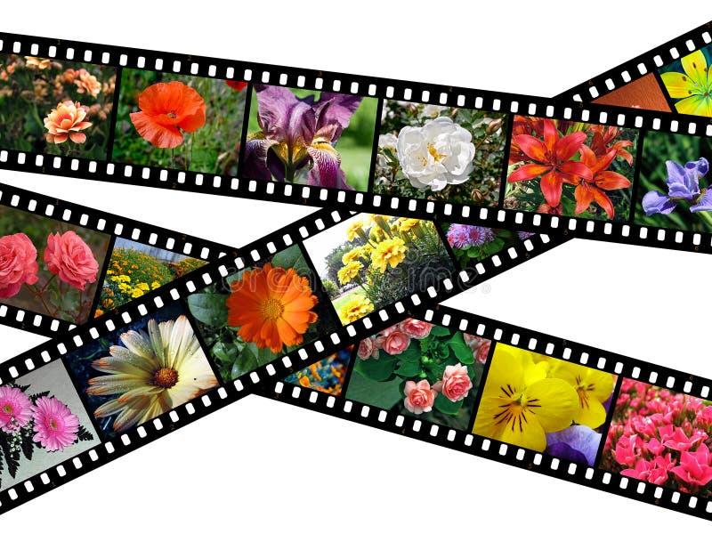 Download Floral Filmstrips Illustration Stock Illustration - Image: 3509684