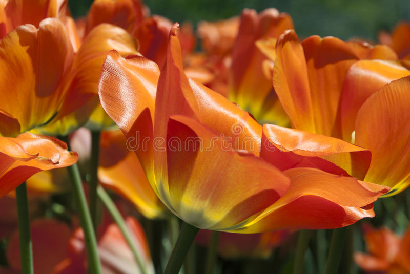 Download Floral Fire stock photo. Image of fire, brightly, green - 30418648