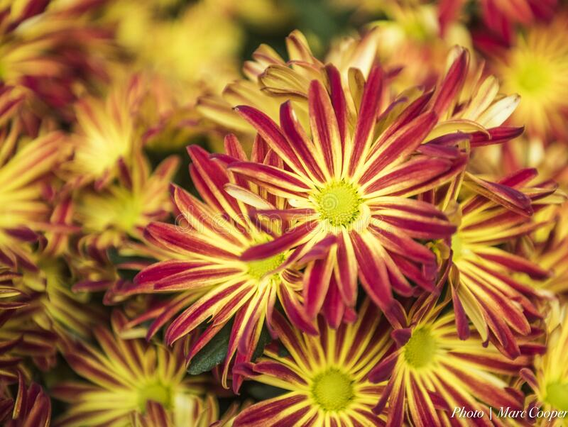 Floral Fireworks Free Public Domain Cc0 Image