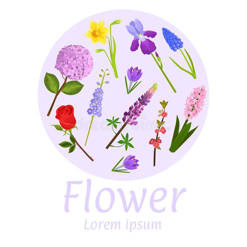 Floral flower card design vector illustration. Natural botanical circle frame garden lavender, rose, iris and narcissus stock illustration