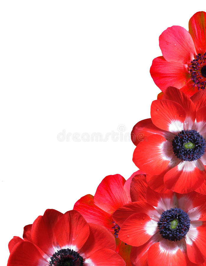 Free Floral Frame Royalty Free Stock Images - 14744639
