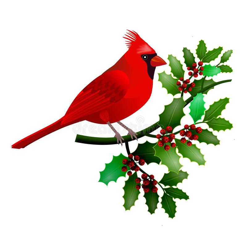 Floral frame with cardinal bird on holly branch with green leaves and red berries. vector illustration