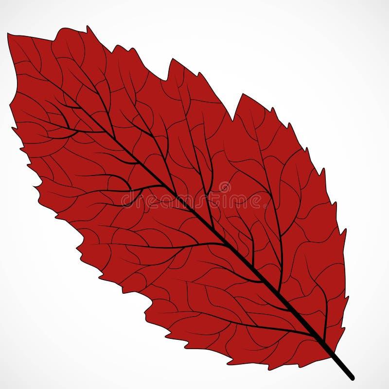 Floral frame design. Isolated leaf illustration element. Silhouette vector. Eco design vector illustration. Organic texture. Leaf royalty free illustration