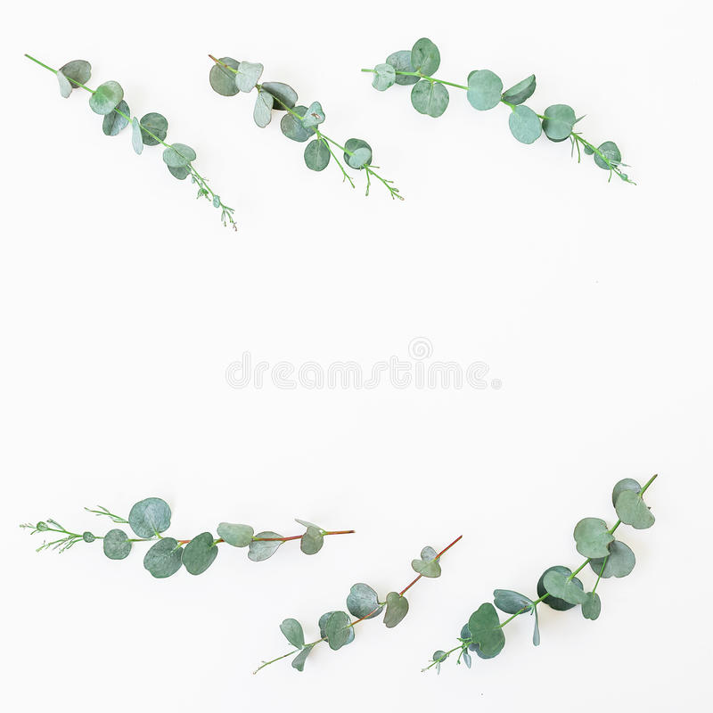 Floral frame with eucalyptus leaves and branches on white background. Flat lay, top view. royalty free stock photography