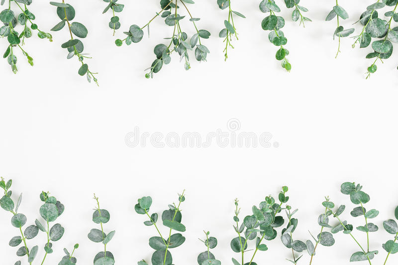 Floral frame of eucalyptus leaves isolated on white background. Flat lay, top view stock image