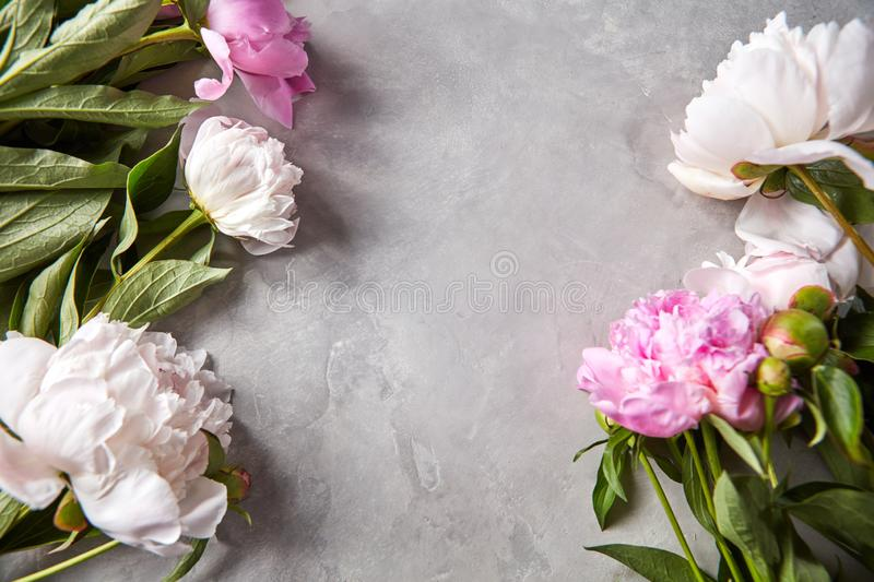 Floral frame of fresh peony flowers with green leaves on a gray concrete background with copy space. Postcard. Flay lay royalty free stock photography
