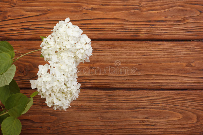 Floral frame made of hydrangeas stock photography