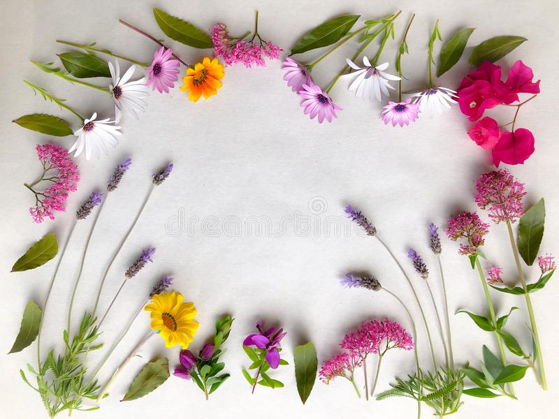 Colourful spring flowers natural background on white. Floral frame made with freshly picked garden flowers including lavender, osteospermum, valerian stock photography