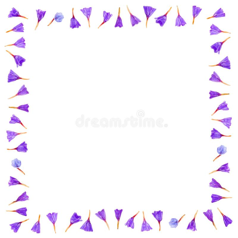 Floral frame made of Limonium or Statice flowers isolated on white background. Top view with copy space. Flat lay stock illustration