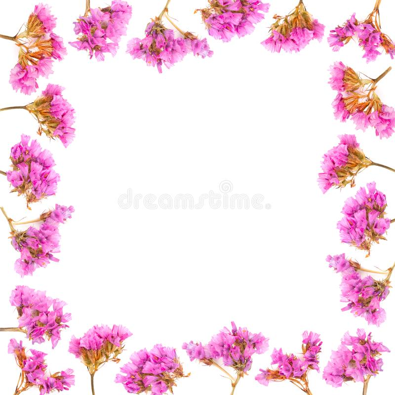 Floral frame made of Limonium or Statice flowers isolated on white background. Top view with copy space. stock photo