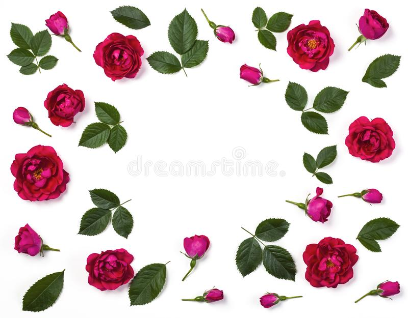 Floral frame made of pink rose flowers, buds and leaves isolated on white background. Flat lay. stock photos